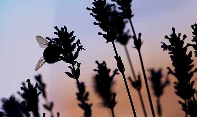 Artificial light places pollination in a state of peril